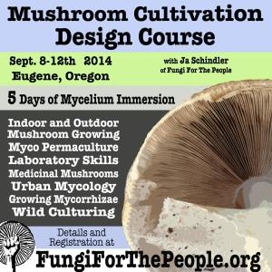 Mushroom Course