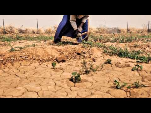 desertification of farmland