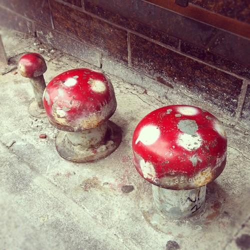 Mushroom Street Art | San Francisco