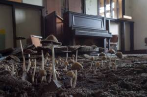 Mushroom fruiting from a flooded home in Detroit, Mi