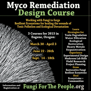 Mycoremediation Design Course Flier