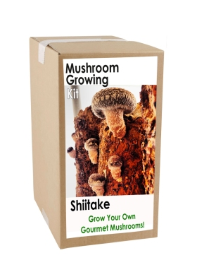 Shiitake grow kit