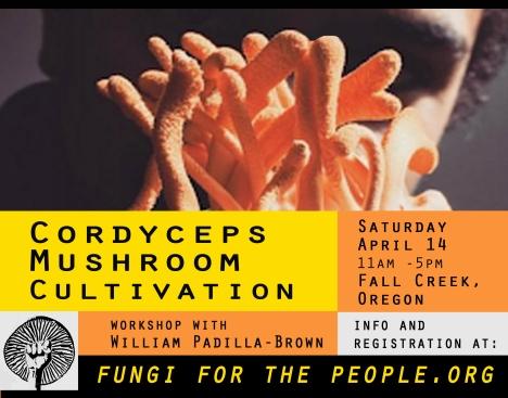 Cordyceps Mushroom Cultivation | FUNGI FOR THE PEOPLE